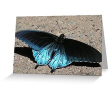 Iridescent Blue Greeting Card