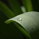 Waterdrop Leaf by Helmar Designs