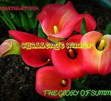 Glory of Summer Challenge Winner Banner by BlueMoonRose