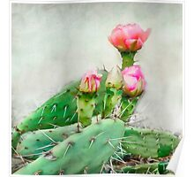Cactus Pink Blooms Poster