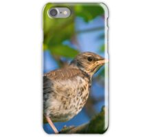 young Fieldfare (Turdus pilaris) - Jaworze, Poland iPhone Case/Skin