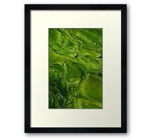 Green Algae Abstact Framed Print
