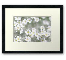 white spring flowers field  Framed Print