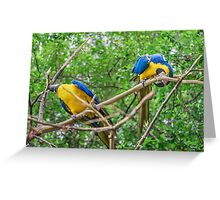 South American Couple of Parrots Greeting Card
