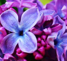 Lovely Lilacs Sticker