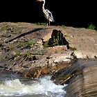 Heron at the Weir by mikebov