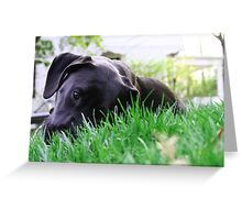 Baby Carter - Puppy Greeting Card