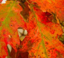 Dying Oak Leaves Sticker