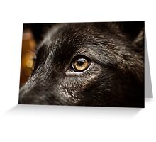 Wild Eye Greeting Card