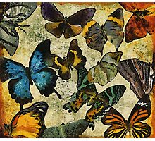 The Butterfly Collection #1 Photographic Print