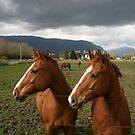 Two Horse Power by PrairieRose