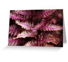 Burgundy Lace Greeting Card