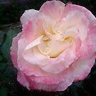 Loma's Rose by MardiGCalero