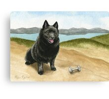 Schipperke With Dumbbell Canvas Print