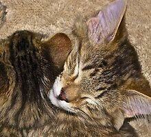 Sleepy Kittens by John Butler