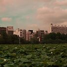 Lilly Pads in Tokyo 2 by Christian Eccleston