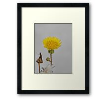 NS Yellow Side© Framed Print