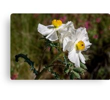 Pair of prickly poppies Canvas Print