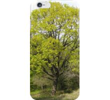 A Tree Close to Our Home in Romania iPhone Case/Skin