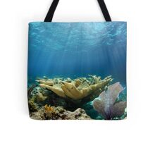 Shallow Reef Tote Bag