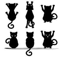 Black Cat Silhouette Photographic Print