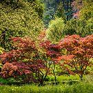 Nature's Palette by vivsworld