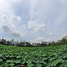 Lilly Pads in Tokyo 3 by Christian Eccleston