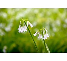 White petals on a day in spring Photographic Print