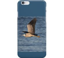 australian grey heron iPhone Case/Skin