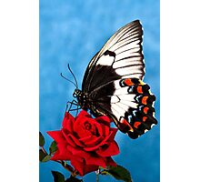 Butterfly Rose Photographic Print