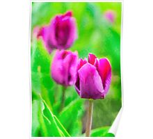 Purple Buds Of Tulips Poster