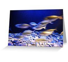 fishes in aqaurium Greeting Card