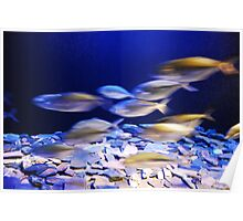 fishes in aqaurium Poster