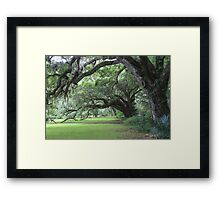 Enchanted Live Oak Row Framed Print