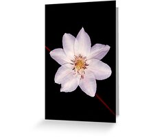 White Clematis Flower on Black Greeting Card