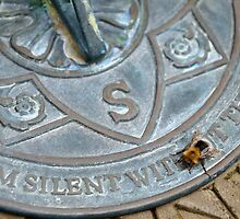 Bee on Sundial by Stephen Frost