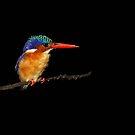 Sleepy Kingfisher by BlaizerB