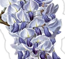 Flower - Wisteria Sticker