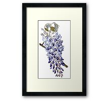 Flower - Wisteria Framed Print
