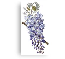 Flower - Wisteria Canvas Print