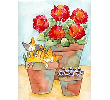 Sleeping Kittens and Geraniums Photographic Print