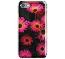 Livingstone Daisies iPhone Case/Skin