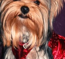 Cute Yorkie Puppy In Red Dress Sticker