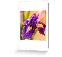 Lovely Iris With Dew Drops Greeting Card