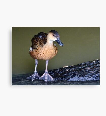 I don't want to put my big feet in it! Canvas Print