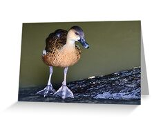 I don't want to put my big feet in it! Greeting Card