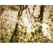 Swan Bones Photographic Print