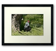 Silver Phoenix rooster Framed Print