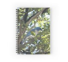 Gray Chested Jay Spiral Notebook