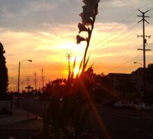 Gladiola Sunset Sticker